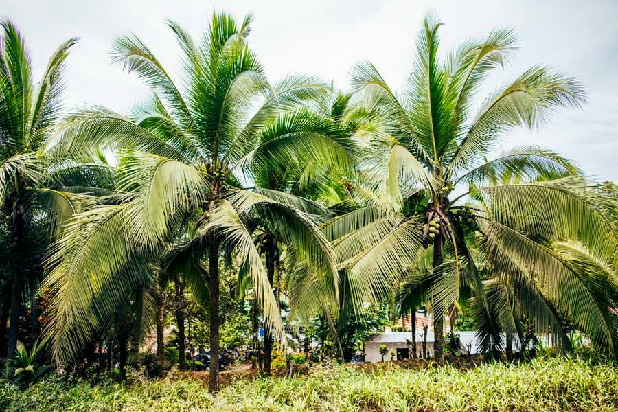 Ytt 300 Costa Rica August 2021 Marianne Wells Yoga School